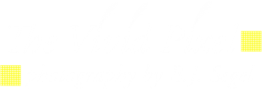 The Vivid Pixel-Photography by B.J. Segel